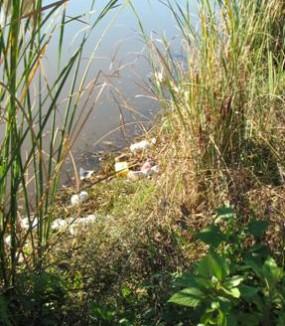 <span>Creek</span> Cleanups