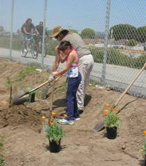 Planting Native California Plants