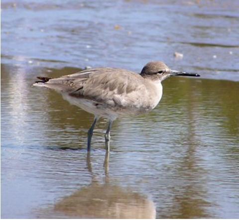 15 pájaros con la pluma emplumada Noggins | Hilo dental