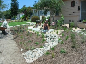 Volunteers and homeowners work on placing rocks in the swale, drought-tolerant native plants and mulch on a former lawn.